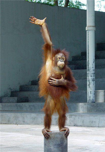 małpa 3.jpg
