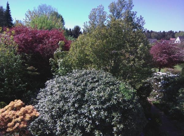 Ogród podopiecznej, widok z mojego okna na początku maja.