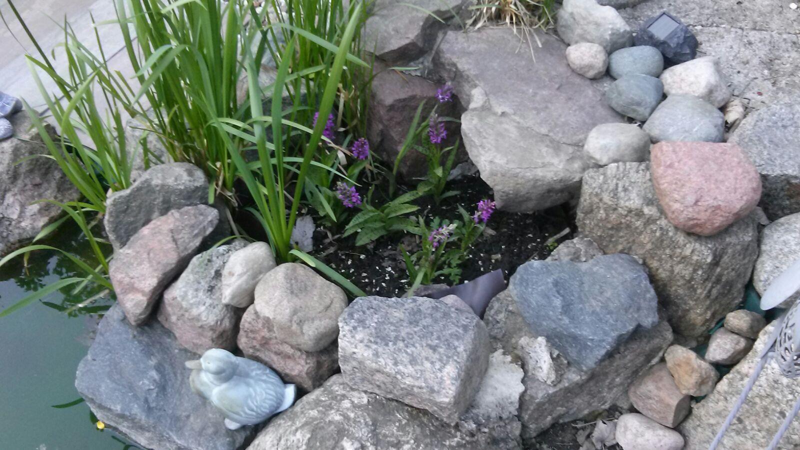 Wiosna...moje storczyki.jpg